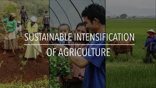 La intensificación sostenible de la agricultura