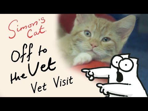 Simon s Cat in Off to the Vet  Vet Visit