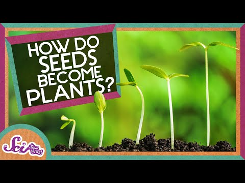 Video How Does A Seed Become A Plant? download in MP3, 3GP, MP4, WEBM, AVI, FLV January 2017