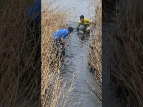 Bắt cá ở nhật - Thời lượng: 3:43.