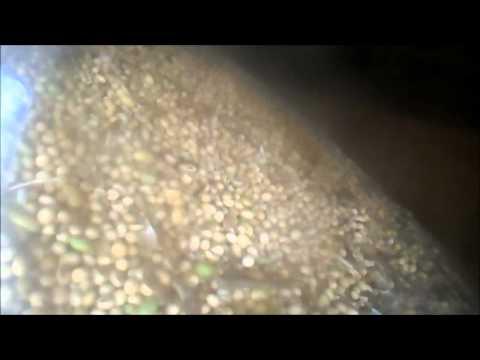 Fazenda São Jerônimo - Colheita de soja Safra 2013/14 Nova Rosalândia/TO