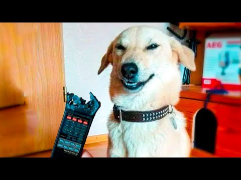 😁 Funniest 🐶 Dogs and 😻 Cats - Awesome Funny Pet Animals' Life Videos