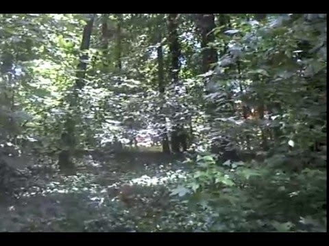 Quick Video of Bigfoot Walking in the Forest