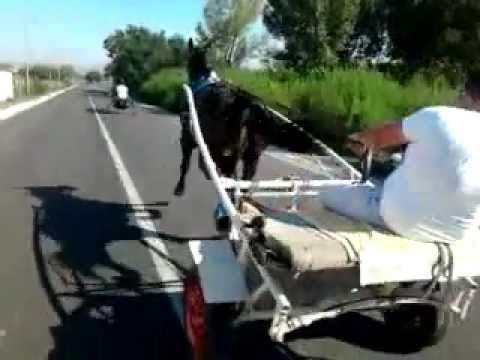IL CAVALLO PIU VELOCE DELLA CAMPANIA BY CALIOTI