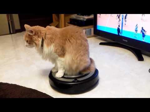 「[ネコ]まるで映画のワンシーンのように颯爽と登場するルンバに乗るネコ。」のイメージ