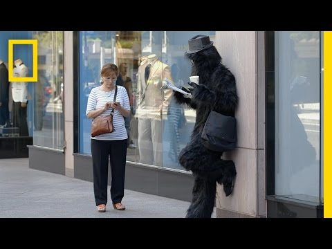 Walking While Texting – National Geographic video