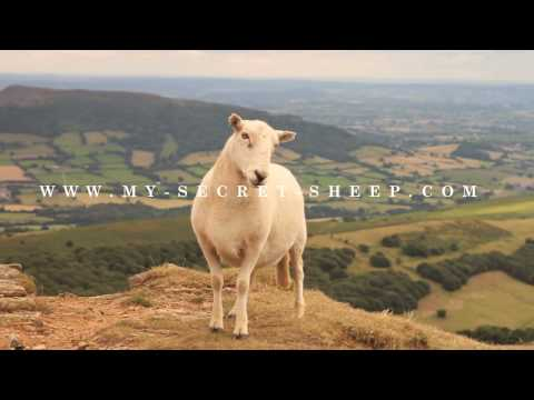 Banned commercial for sheepdating website