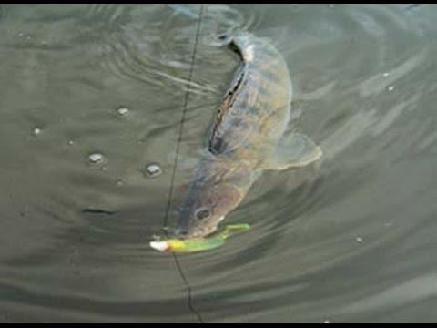 ловля на плавающий силикон на малых реках видео