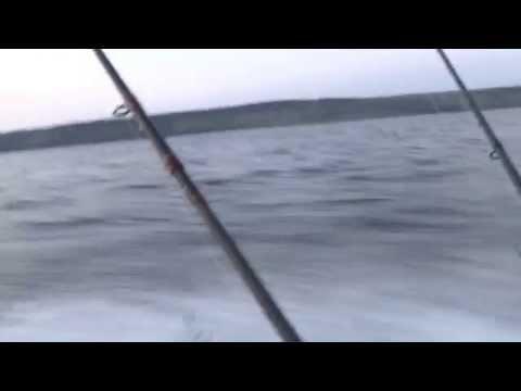 фиона рыболовный форум рязань