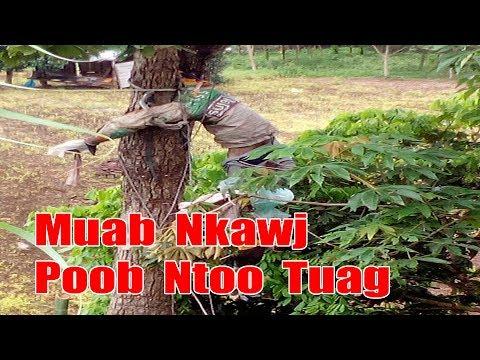 Hmong News 2017 - Muab Nkawj Poob Ntoo Tuag 25/08/2017 [Xov Xwm Hmoob 2017] (видео)