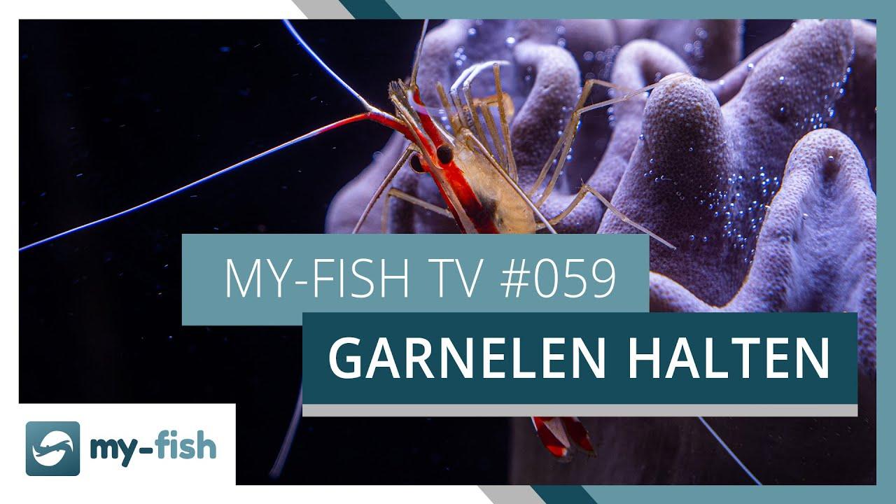 my-fish TV - Deine Nr. 1 Anlaufstelle für alle Themen rund um die Aquaristik 5