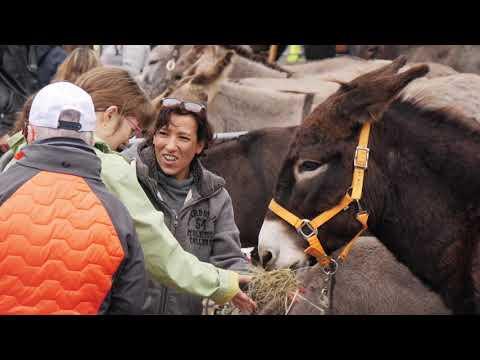 Fête de l'âne Yvoire 2018 (Haute-Savoie)
