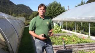 #823 Dahlien - Vorteile von Jungpflanzen im Topf