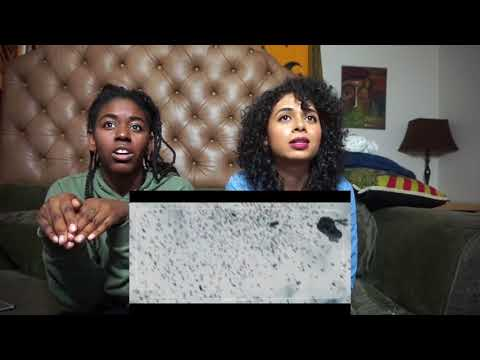 """Black Mirror 3x6 """"Hated in the Nation"""" REACTION & DISCUSSION"""