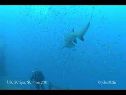 Encuentro con tiburón de arena