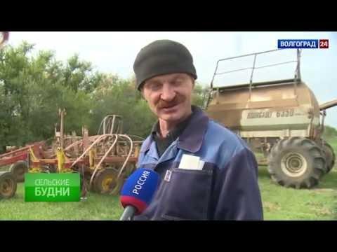 Чернышковский район. Выпуск от 17.10.2016.