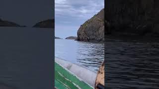 W Kanadzie sfilmowali łosia skaczącego z klifu do wody