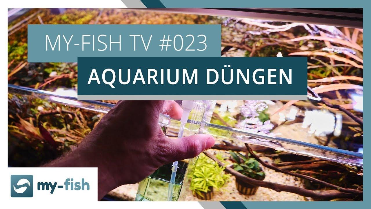 my-fish TV - Deine Nr. 1 Anlaufstelle für alle Themen rund um die Aquaristik 41