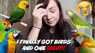 I FINALLY GOT BIRDS AND ONE DIED?! | MEET MY NEW PET BIRDS | Storytime by Maddie Smith