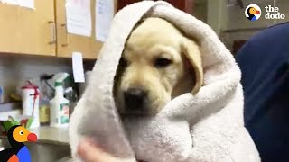 LIVE: Guide Dog Puppies FIRST Bath | The Dodo by The Dodo