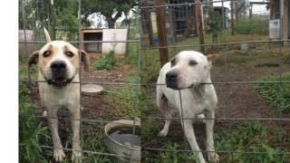Wharton (TX) United States  city photos : Smiling Dog Farms in Wharton, Texas