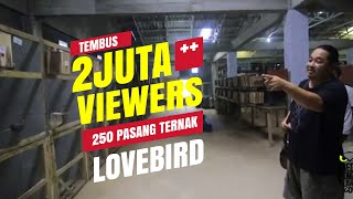 Video DUNIA HOBI : Ternak 250 Pasang Lovebird Milik Kurnia Bird Farm MP3, 3GP, MP4, WEBM, AVI, FLV November 2018