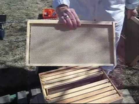 bee - Dan explains how he puts a new colony of bees into their new hive. Protective clothing, tools and equipment are shown and explained. If you have any comments...