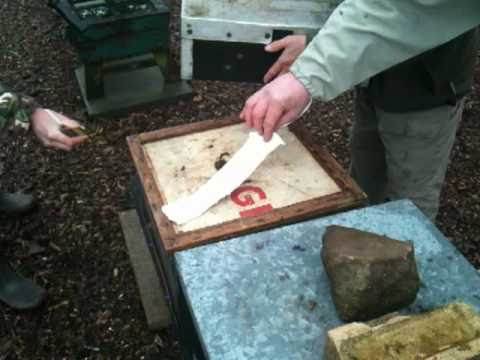 Feeding Fondant to Honeybees in Winter