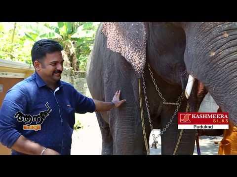 Video Umamaheswar madom  Umadevi  (aana peruma episode -30 ) download in MP3, 3GP, MP4, WEBM, AVI, FLV January 2017