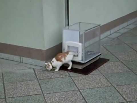 il gatto sale sul tetto e per scendere usa un metodo che vi sorprenderà!