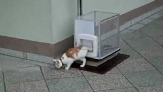 Кото-лифт