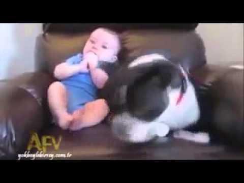 Hund flüchtet vor pupsenden Baby