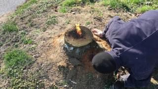 Genialny sposób jak pozbyć się pnia po ściętym drzewie?