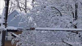 Un écureuil déneige un câble pour frayer son chemin.