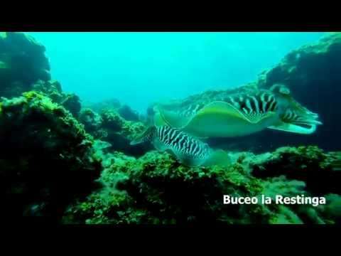 Buceo la Restinga, Marzo / Abril del 2014