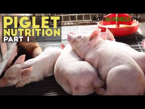 Hog Raising - Piglet Nutrition - Agribusiness Season 3 Episode 3 Part 1