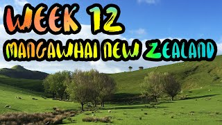 Mangawhai New Zealand  city photos : Rent a Farmhouse in the Green Hills of New Zealand!! /// WEEK 12 : Mangawhai, New Zealand