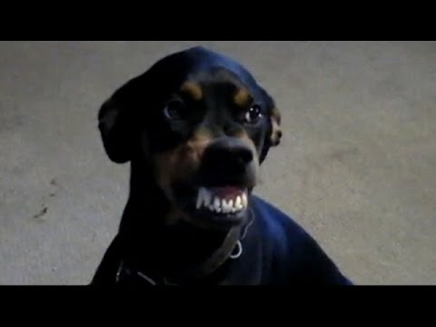 DOG FARTS AND MAKES A FUNNY FACE EWWW