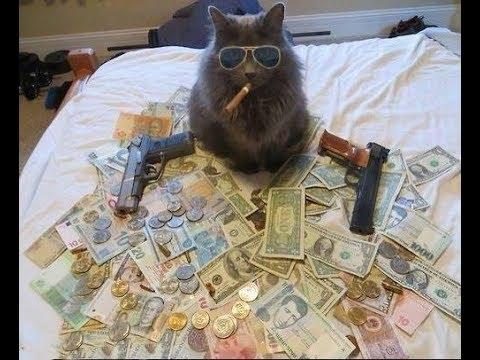 Đội quân mèo vui vẻ :D