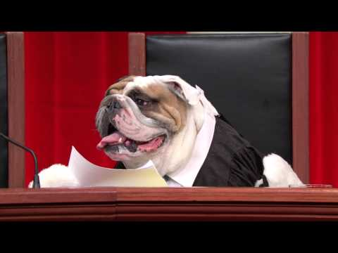 footage - We have provided this footage for you to do your own Supreme Court reenactments. Please feel free to use it, post your videos, and tag them #RealAnimalsFakePaws so we can find them. You can...