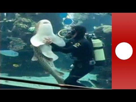 Καρχαρίας απολαμβάνει τα χάδια ενός δύτη