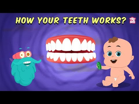 How Your Teeth Work? - The Dr. Binocs Show | Best Learning Videos For Kids | Peekaboo Kidz