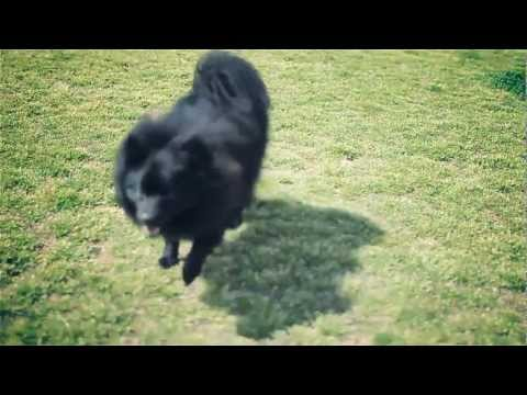 Playful Pomeranian Gives Doggy Kisses | The Daily Puppy