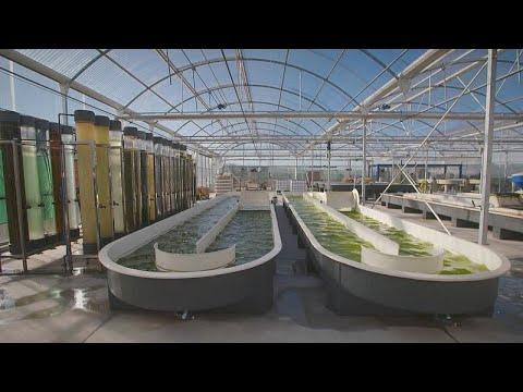 Spanien: Mikroalgen - das grüne Gold der Natur - für Nahr ...
