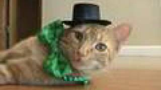 Happy St. Patrick's Day from my cat!