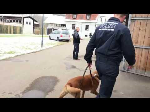 Kollege auf vier Pfoten - die Polizeihundestaffel Reu ...
