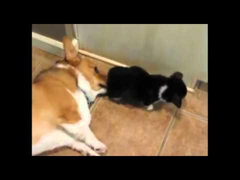 Hund pupst anderen Hund ins Gesicht