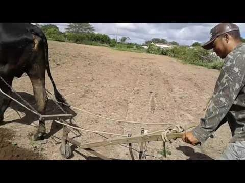 Agricutor em Logradouro