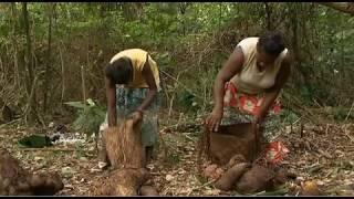 de Anne Pitoiset et Laurent Cibien - Archipel du Vanuatu, Sud Pacifique. Côté pile, c''est un paradis pour ceux qui ne veulent pas payer dimpôts. Il ny a aucune ...