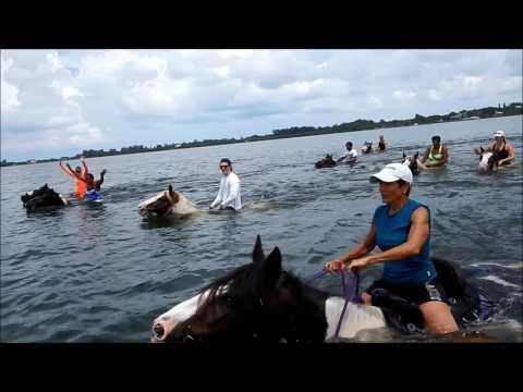 CPonies Beach Horseback Rides - Bradenton, Florida